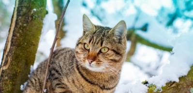 Rüyada kedi görmek nasıl yorumlanır?