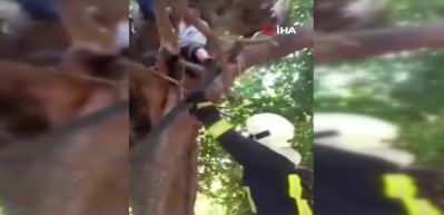 Ağaçta Mahsur Kalan Yaşlı Adamı İtfaiye Kurtardı