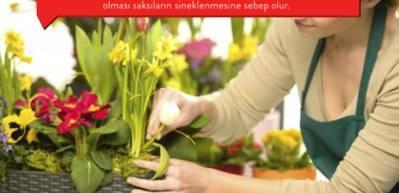 Saksı çiçeklerinin sineklenmesi nasıl önlenir?
