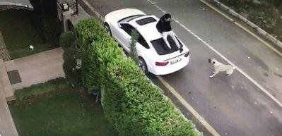 Sokak köpeği saldırınca arabanın üzerine böyle çıktı