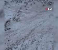 Yayladan inerken kar sürpriziyle karşılaştılar