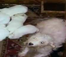 Binanın bodrum katında 68 köpek bulundu: Hepsinin ses telleri alınmış
