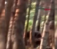 Bozayı, kendisini kurtarmak isteyenleri kovaladı; yaşanan panik kamerada