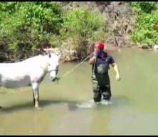 Gürdük Çayında mahsur kalan 2 atı itfaiye kurtardı
