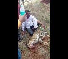 Hindistan'da bir adam ailesine saldıran leoparı elleri ile öldürdü!