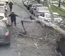 Okmeydanı'nda ağaç araçların üzerine devrildi