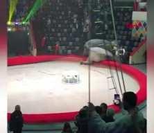 Sirkte filler birbirine girdi: İzleyenler böyle kaçtı