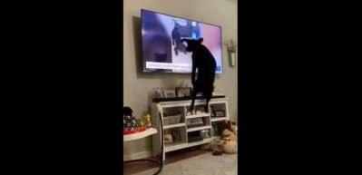 Televizyonda kendisini gören köpeğin tepkisi güldürdü