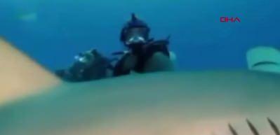 Ünlü boksör Mike Tyson köpekbalıklarının arasına daldı