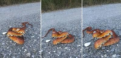 Yılanın inanılmaz görüntüsü