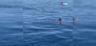 Yüzerken köpek balığıyla burun buruna geldi!