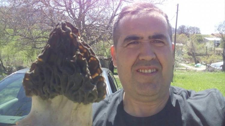 Beyşehir'de kuzugöbeği toplanmaya başlandı