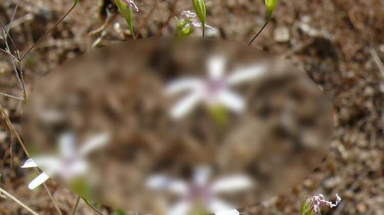 Sadece Türkiye'de yetişen bitki bulundu