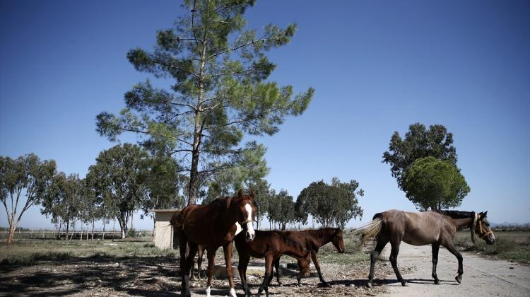 FETÖ'nün kapatılan okulundaki atlar engellilerin hizmetinde
