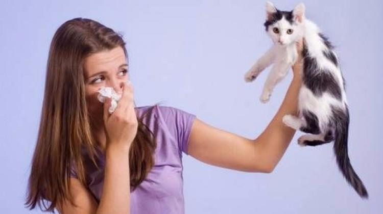 Evcil hayvanlara alerjiniz varsa...