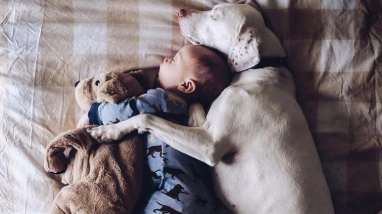 Evcil hayvanlarla büyüyen bebekler daha...