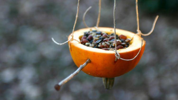 Portakaldan kuş yemliği nasıl yapılır?