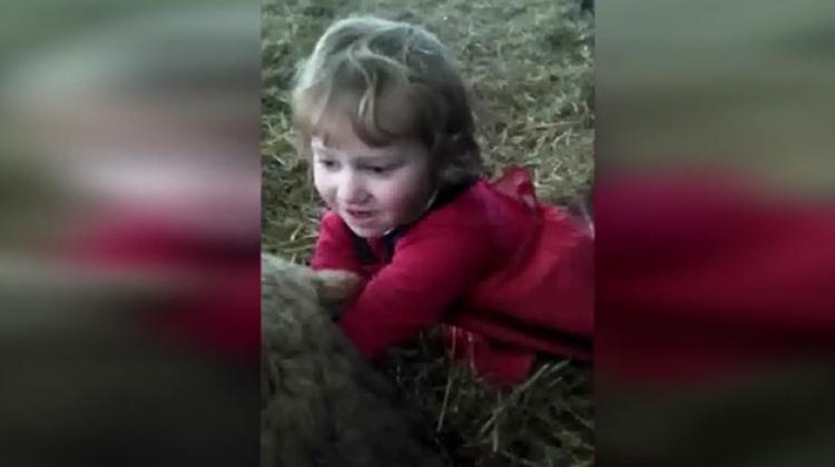 Minik çocuk kuzunun doğumuna yardım etti