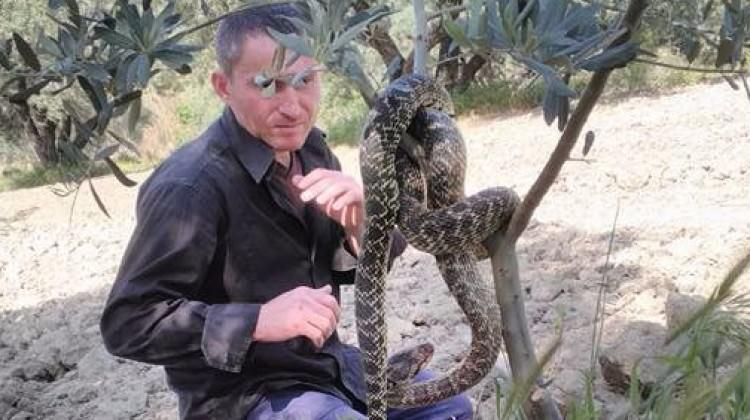 İlçeyi dev yılanlar sardı! Üzerine atladı