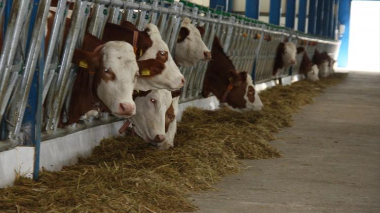 Erzurum'da hayvancılık IPARD ile güçleniyor