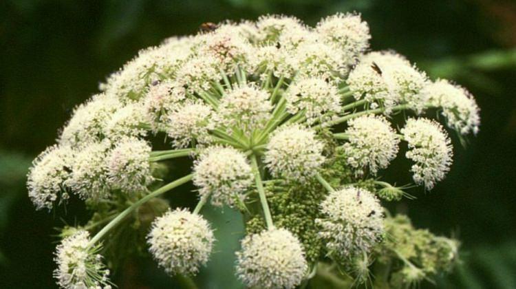 Alerji tedavisinde iyi gelen bitkiler neler?
