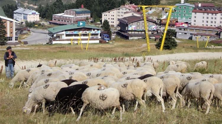 Kışın zenginlerin yazın koyunların mekanı oluyor