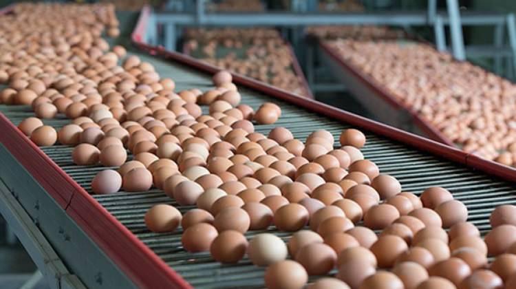 Yumurta krizi büyüyor