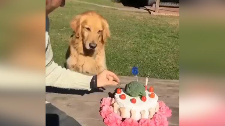 Pastasına dokunulan köpek bakın ne tepki verdi