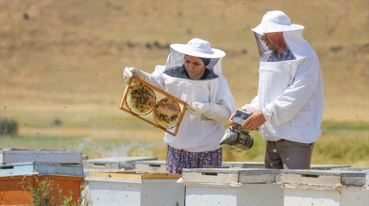 GİRİŞİMCİ KADINLAR - Arılarına çocukları gibi bakıyor