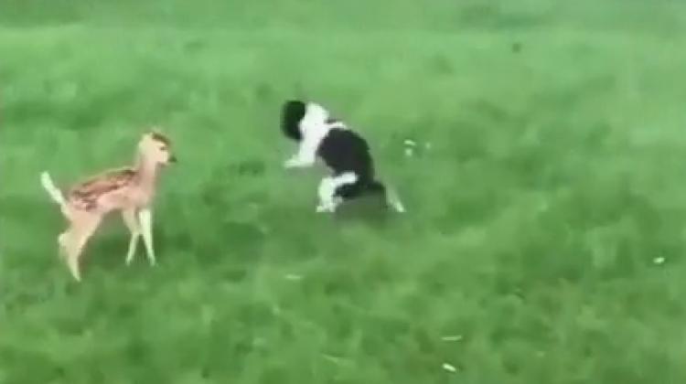 Evin köpeğiyle bahçeye giren ceylan böyle tanıştı
