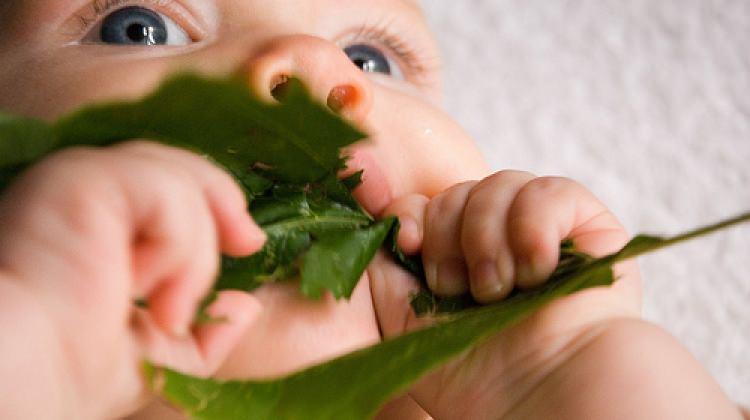 Bebeği olan aileler nelere dikkat etmeli?