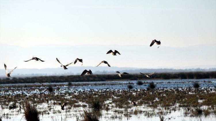 Kızılırmak Deltası için UNESCO Dünya Mirası Listesi'ne başvuru