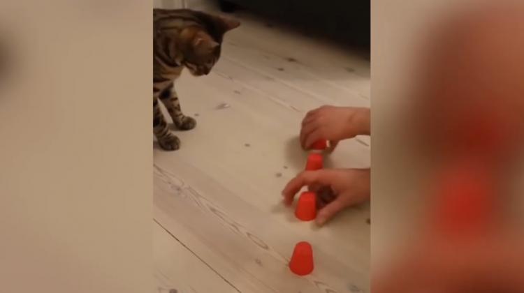 Akıllı kedi, izleyenleri şaşırttı