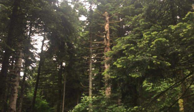 Gölcük'teki orman köşkleri taş ayaklar üzerine yapılıyor