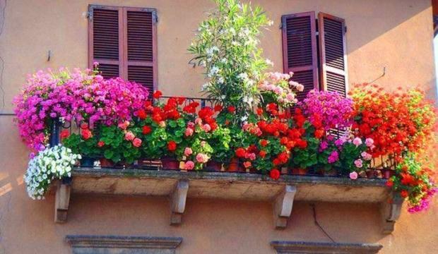 Evde yetiştirilebilecek ve az su isteyen çiçekler hangileri?