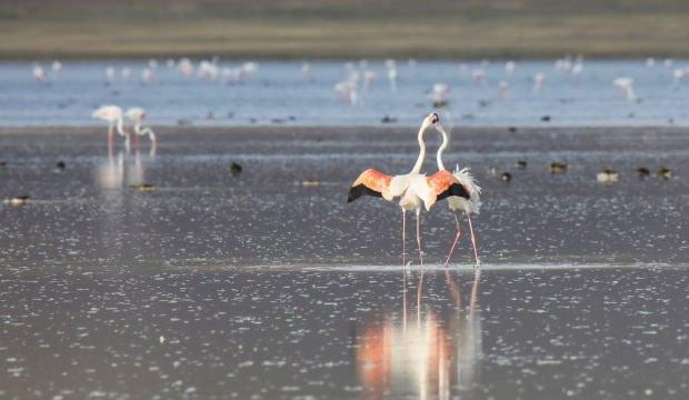 Van Gölü'nden büyüleyici görüntüler