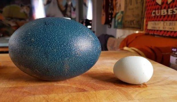 İnternetten yumurta aldı! Açtığı paketle şoke oldu