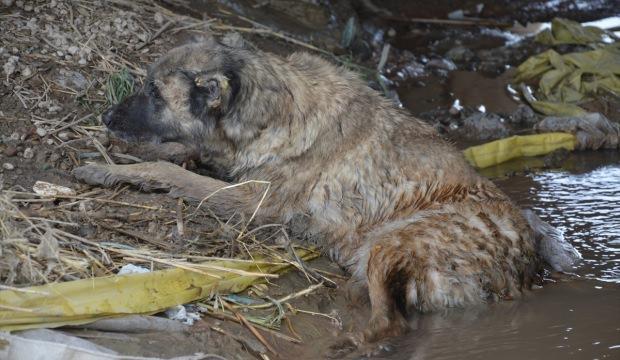 Yaralı köpeğin imdadına belediye yetişti