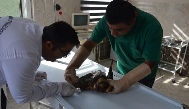 Doğubayazıt Belediyesi yaban hayvanlarının 'sigortası' oldu