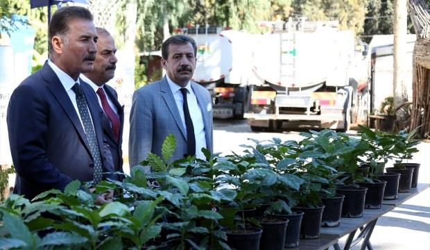 Mersin'de kahve üretimi için bahçe