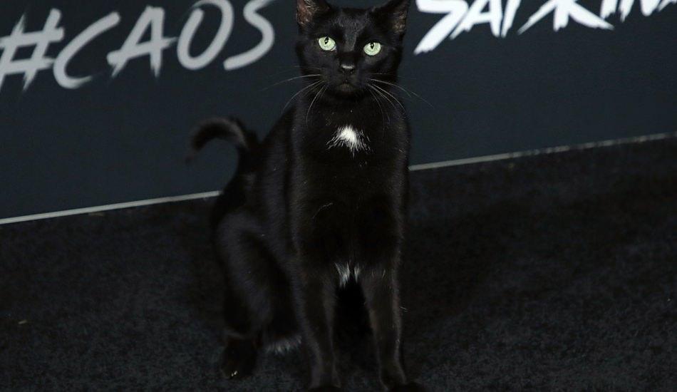 Hollywood galasında bir siyah kedi...