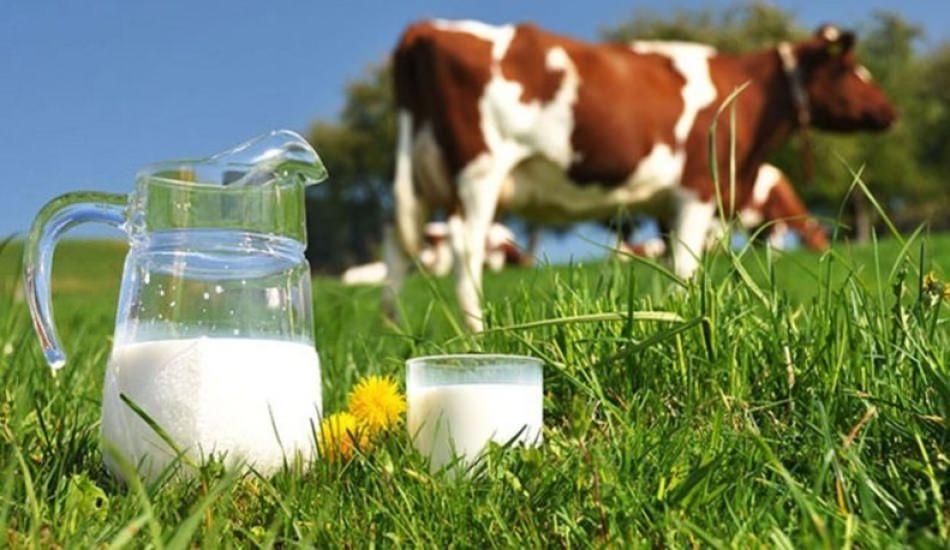 Süt alerjisi nedir? Bebeklerde süt alerjisi ne zaman geçer? İnek sütü alerjisi...
