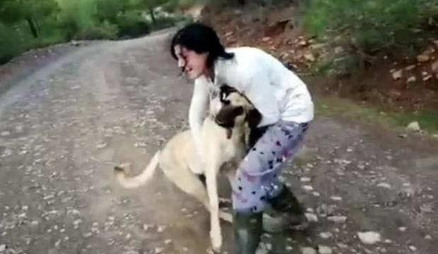 Halk ayağa kalktı! 11 köpek bu halde bulundu