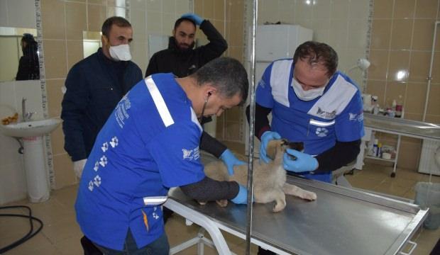 Hakkari'de yaralı köpek tedaviye alındı