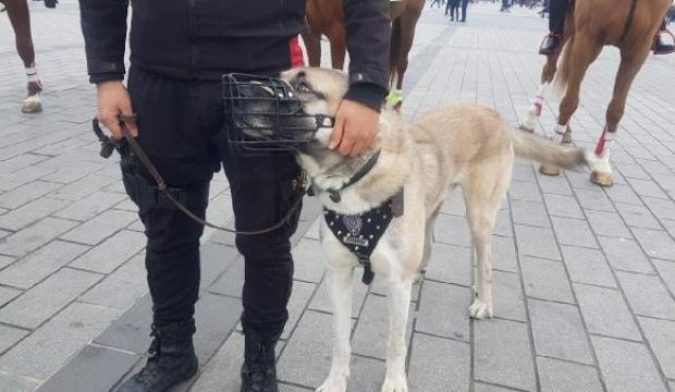 Polis köpekleri Taksim'de yılbaşı devriyesine başladı