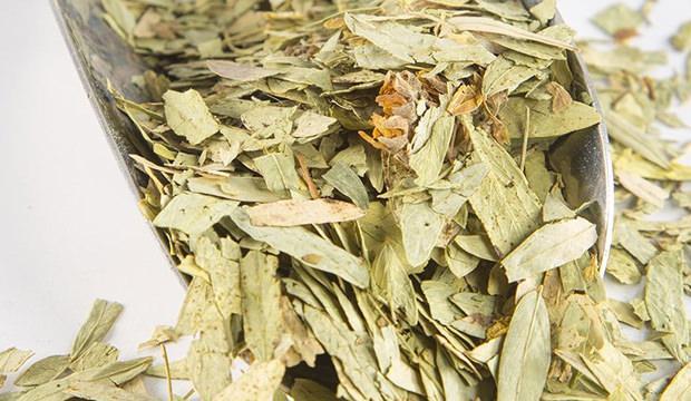 Sinameki faydaları nelerdir? Sinameki çayı zayıflatır mı?