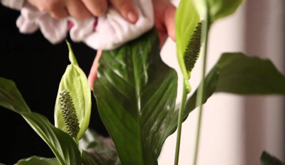 Bahar mevsiminde bitki bakımı nasıl yapılır?