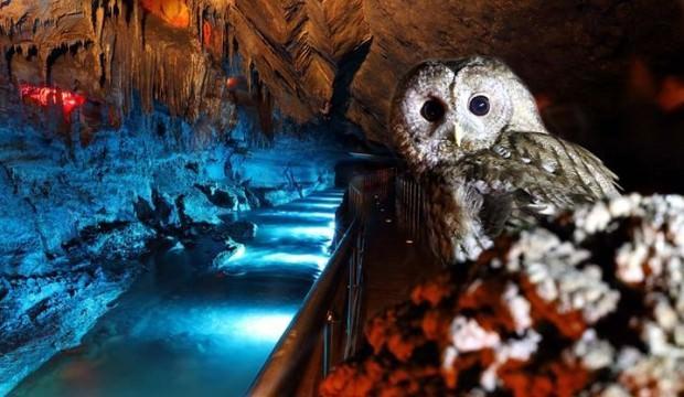 Ailecek Gökgöl Mağarası'na yerleştiler!