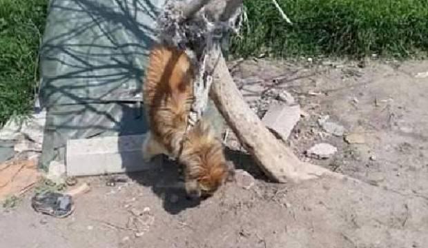 Yok böyle canilik! Köpeğini bu halde buldu
