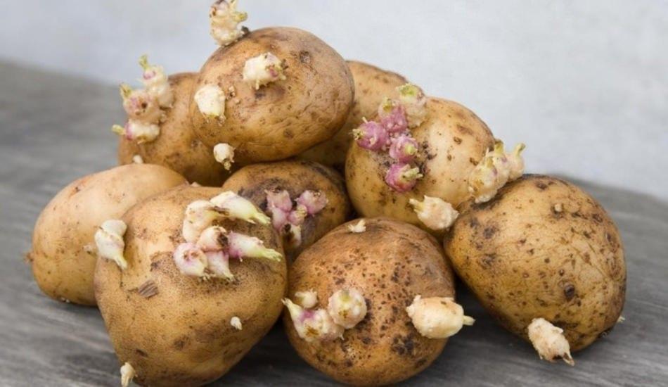 Patatesin faydaları nelerdir? Filizlenen patatese dikkat!